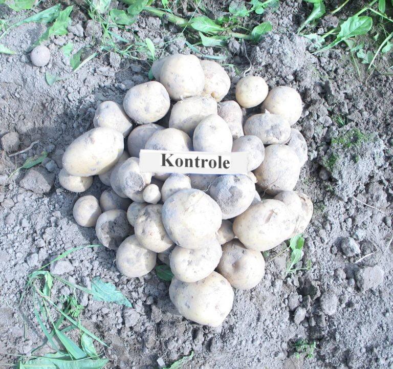 Kartupeļi_kontr_1_m2