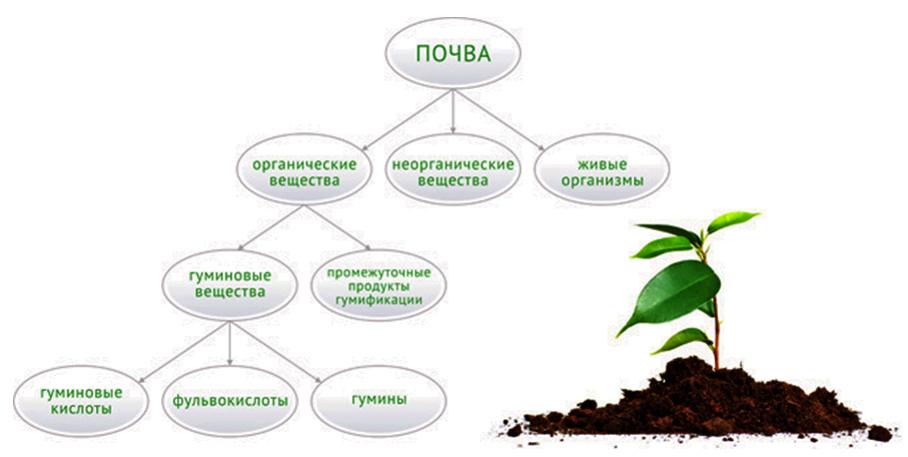 Гуминовые вещества, их происхождение и распространение в природе